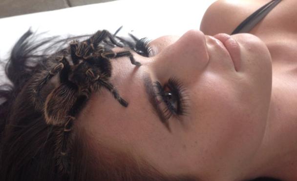 Tarantula on my face