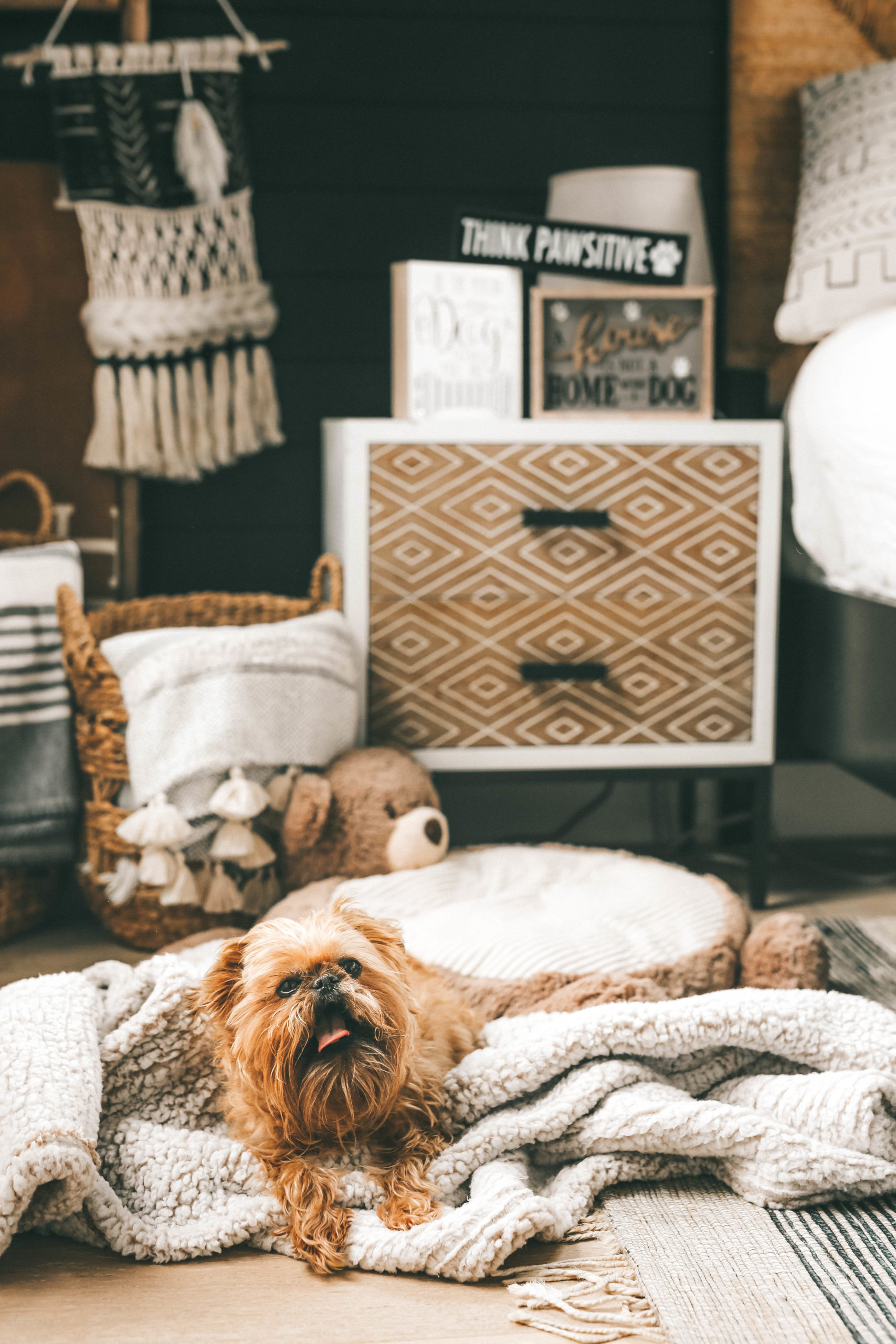How to Pamper Your Pet by popular Nashville life and style blog, Dressed to Kill: image of a dog wearing a stripped outfit and sitting bear shaped dog bed that's next to some various dog signs from Tuesday Morning.