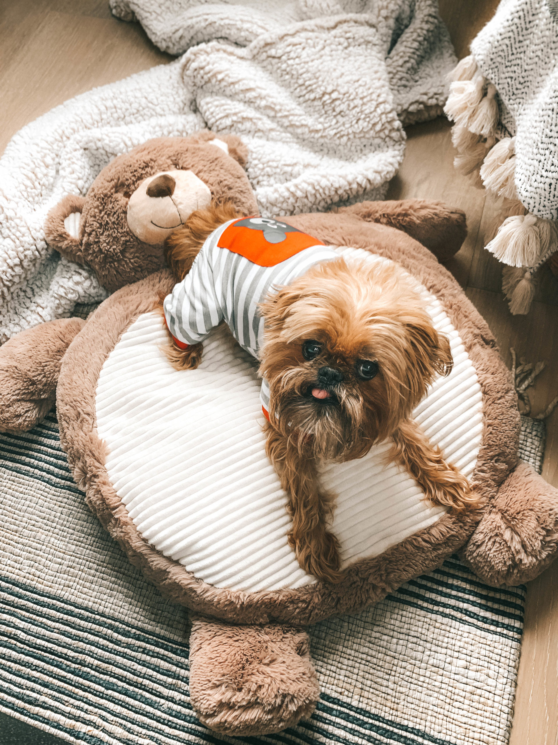 How to Pamper Your Pet by popular Nashville life and style blog, Dressed to Kill: image of a dog wearing a stripped outfit and sitting bear shaped dog bed from Tuesday Morning.