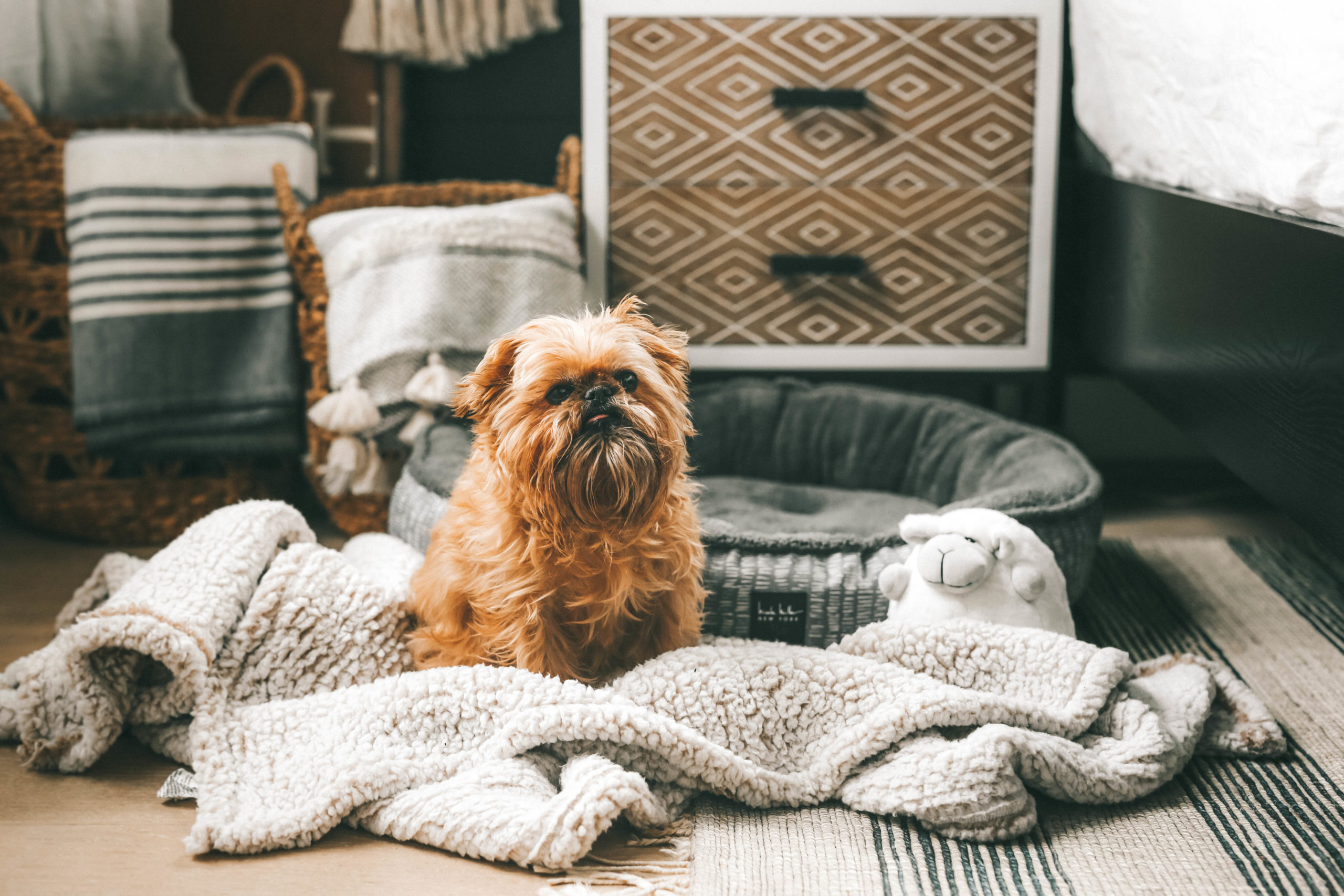 How to Pamper Your Pet by popular Nashville life and style blog, Dressed to Kill: image of a dog, sitting by a grey dog bed with a sheep toy next to some various dog signs from Tuesday Morning.