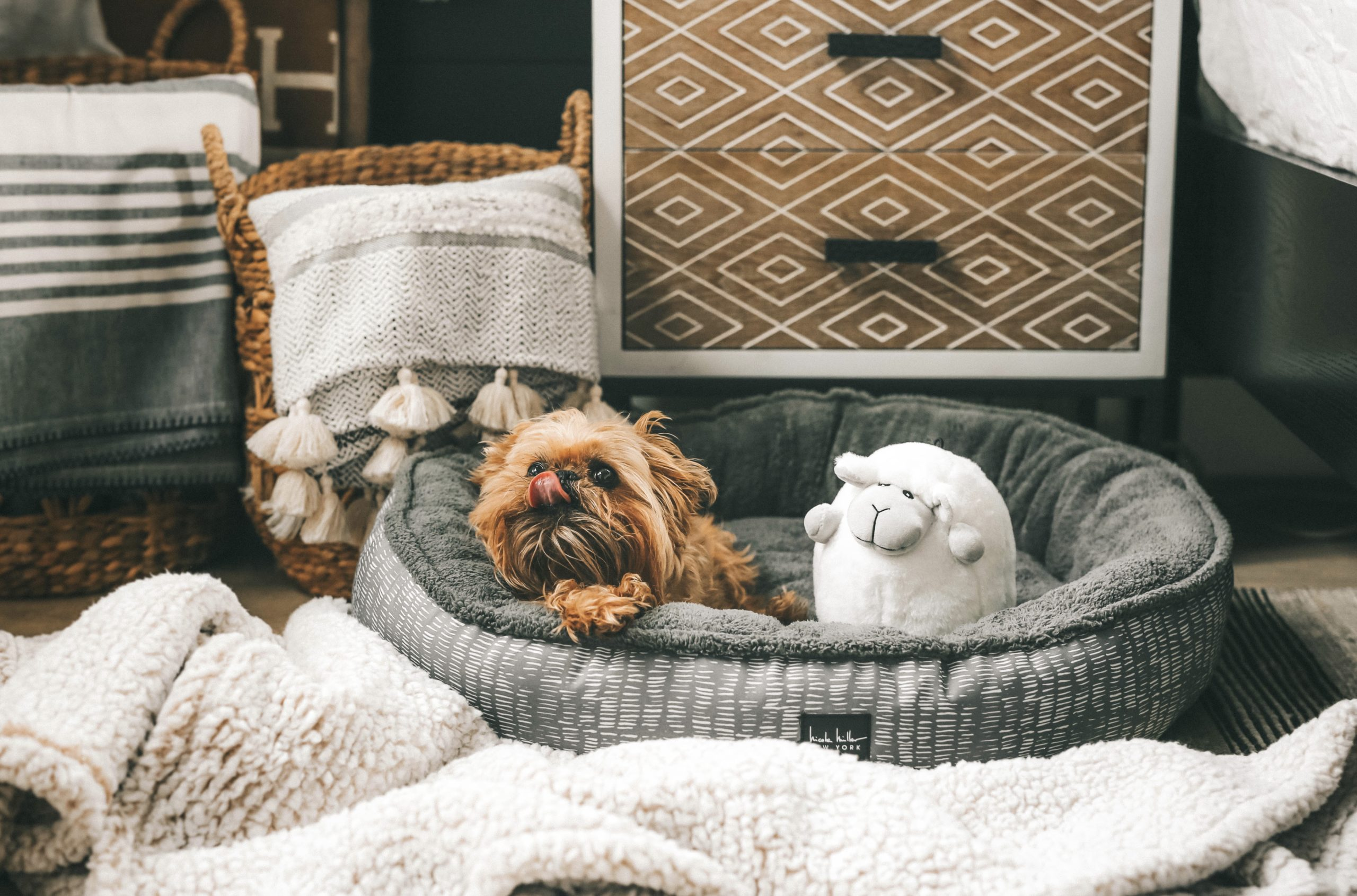 How to Pamper Your Pet by popular Nashville life and style blog, Dressed to Kill: image of a dog, sitting in a grey dog bed with a sheep toy next to some various dog signs from Tuesday Morning.