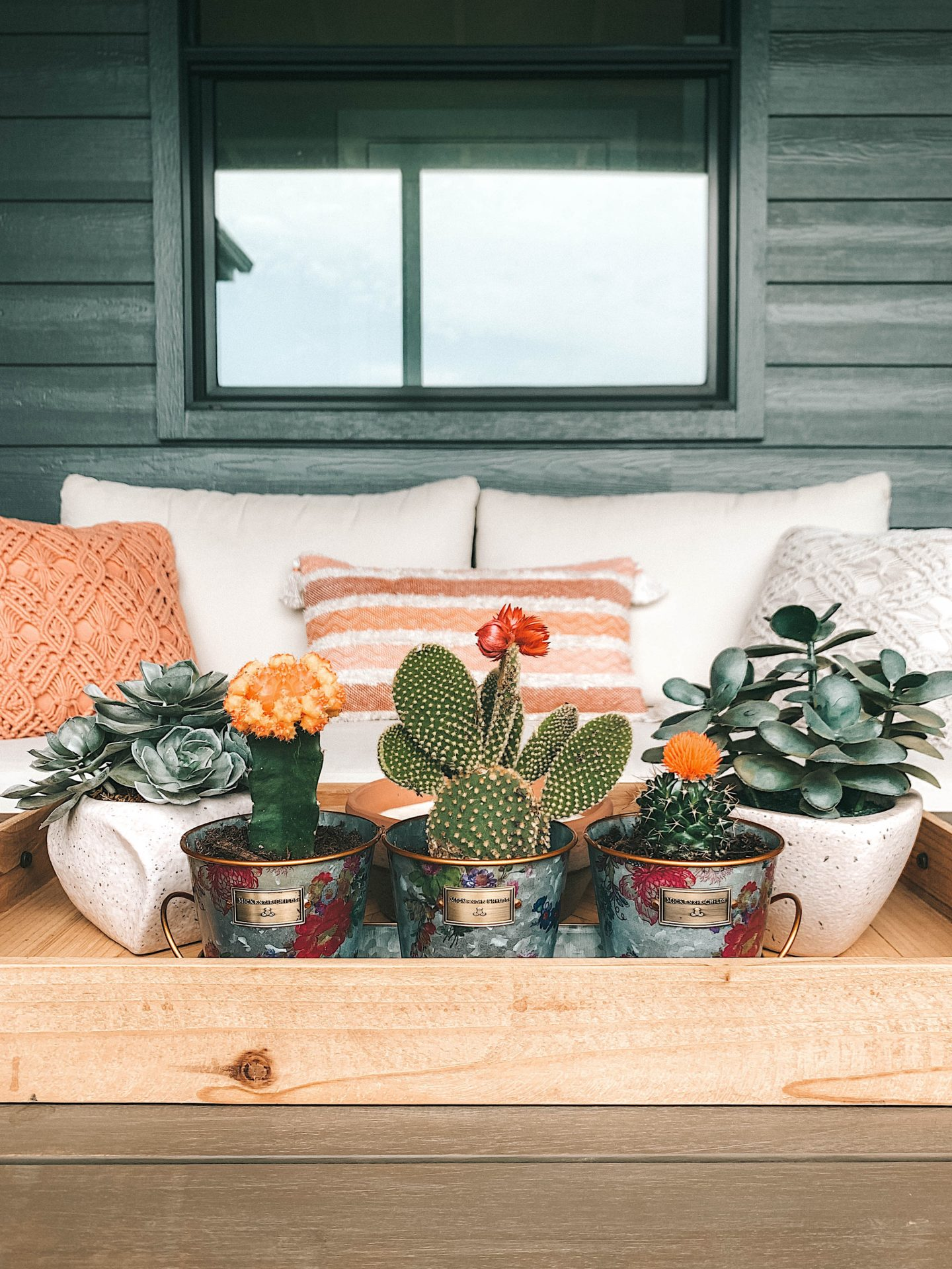 Mackenzie Childs Sale by popular Austin life and style blog, Dressed to Kill: image of various cacti plants in a Mackenzie Child planter pots.